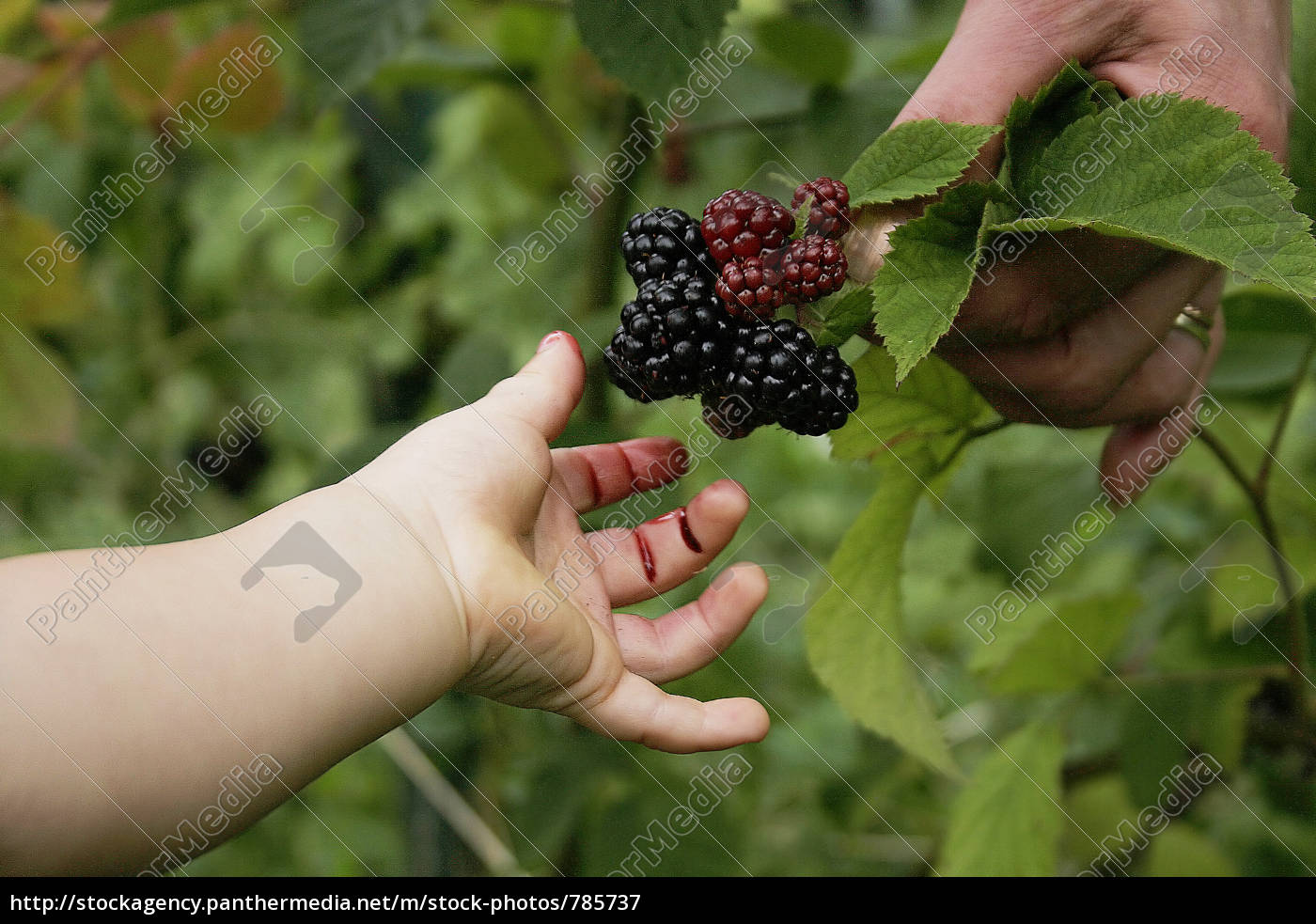 blackberries childhood Heaney begins the narrative of his poem by describing how the berries ripened in late august it would cause great excitement in the children of his native.