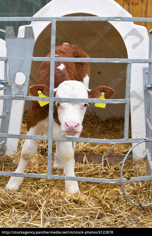 Как сделать кормушку для коровы