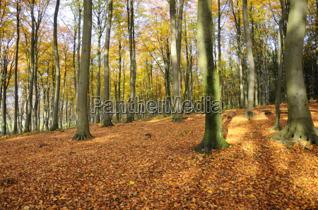 forest floor autumnal forest