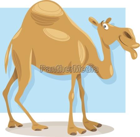 dromedary camel cartoon illustration