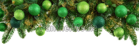 isolated fir branches with green balls