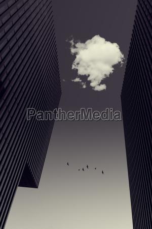 cloud between office towers flying birds