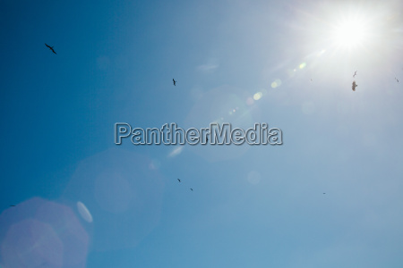birds and sun flare in the