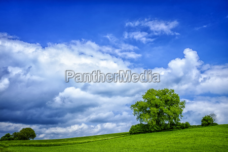 fields landscape with cloudy sky