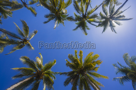 palm trees against the sun copy