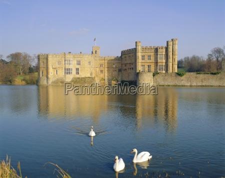 swans in front of leeds castle