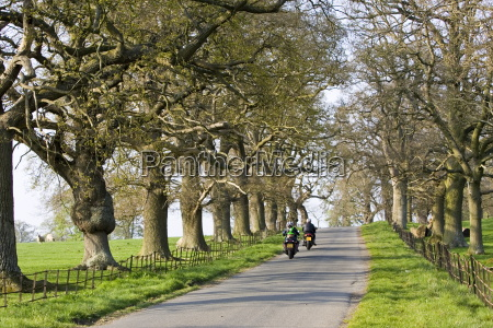 motorcyclists on tree lined country road