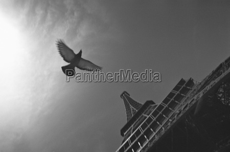 france paris eiffeltum dove flying low