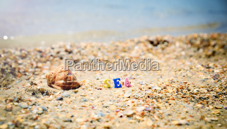 sea shore from seashells and the
