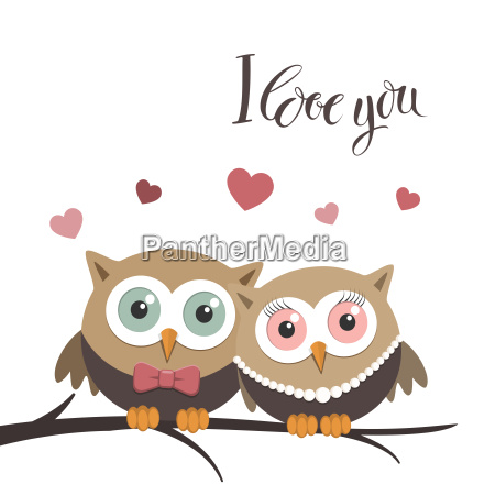 couple of owls in love on