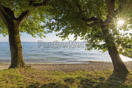 poplar trees with sun at lake
