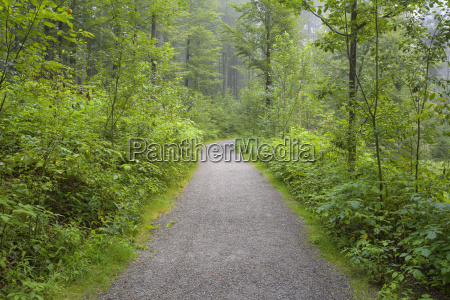 trail through forest in the morning