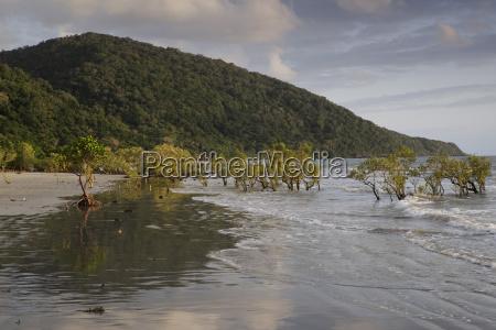 mangrove trees in surf on beach