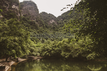 scenic view of trees growing on