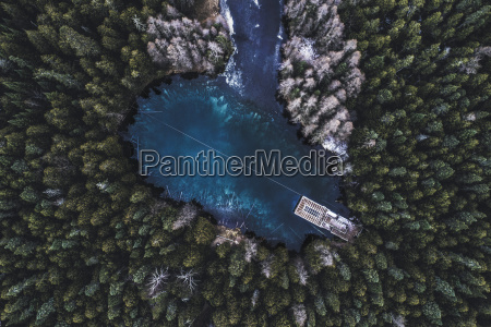 aerial view of trees growing by