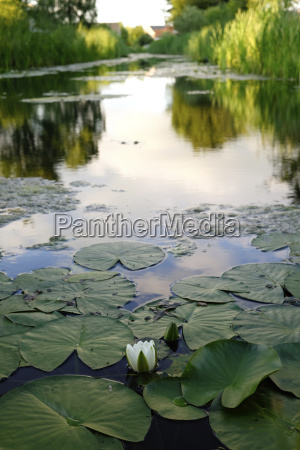 high angle view of lotus water