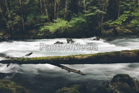 sol duc river flowing in forest