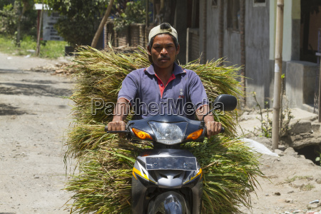 man on a motorcycle carrying grasssemparulombokwest