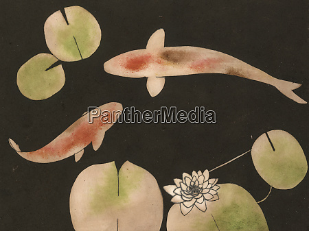 fish and water lilies in pond