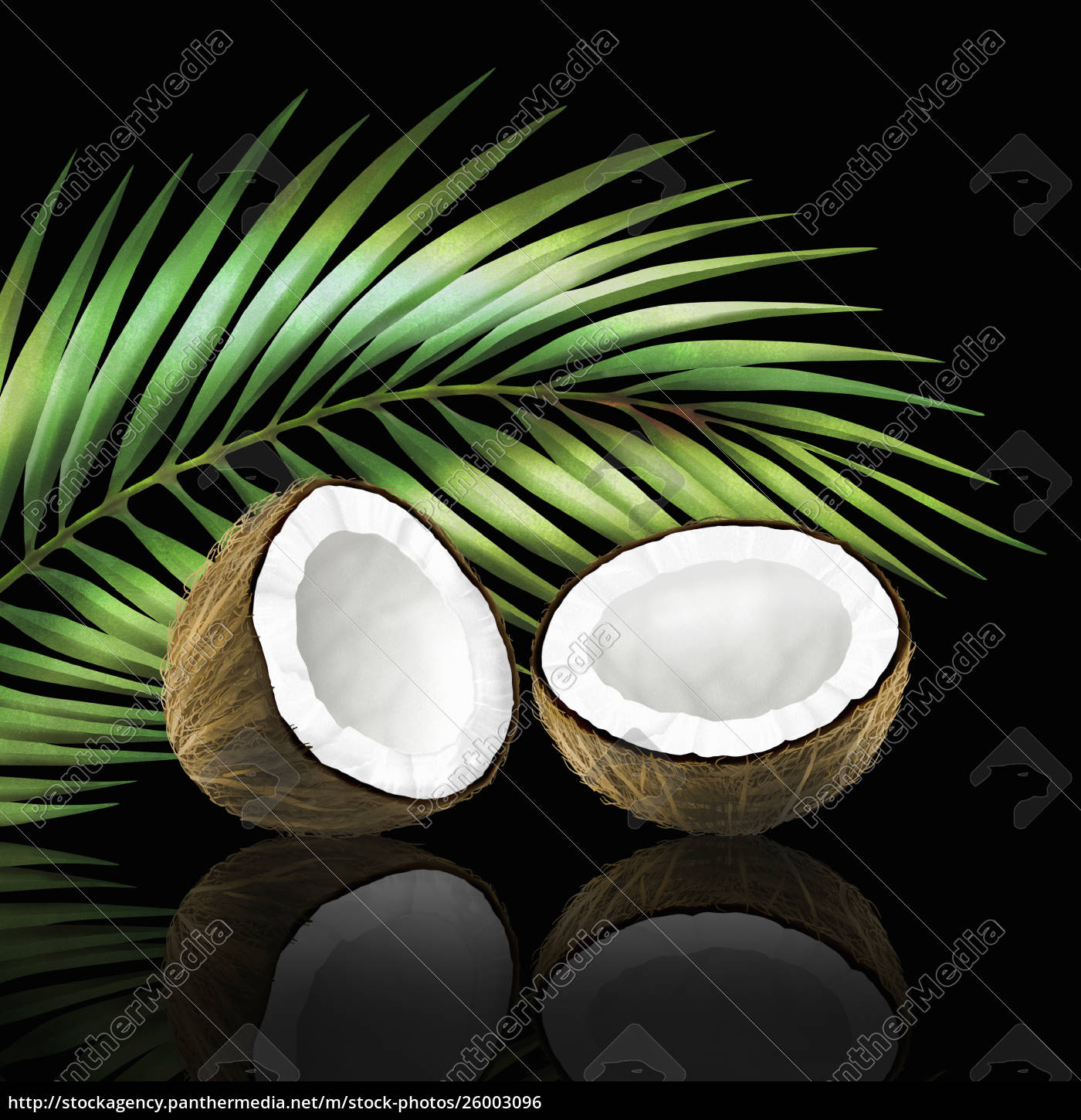 coconut, in, two, halves, with, coconut - 26003096