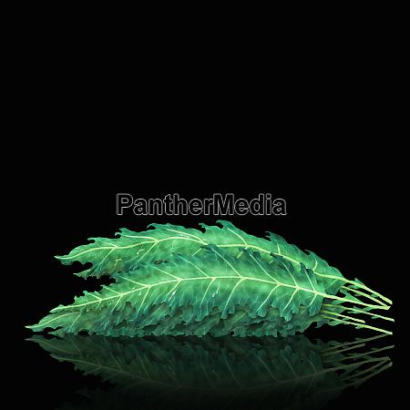 pile, of, kale, leaves - 26003054