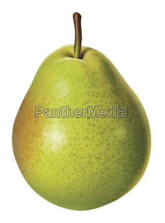 fresh green pear on white background